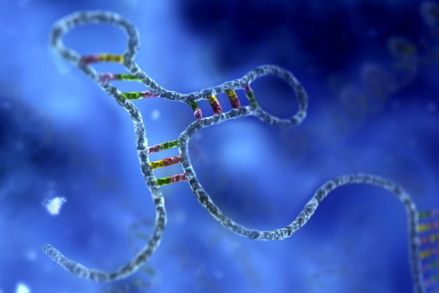 A Detailed Report On Biological Significance, Structure, and Types Of RNA
