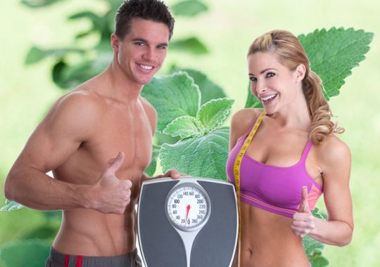 Forskolin Extract – Don't Buy Before Seeing This?
